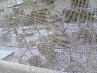 ■2010/3/22(月) 雪だ / 6:40am