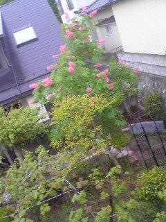 ■2010/5/23(日) マロニエ / 11:05am