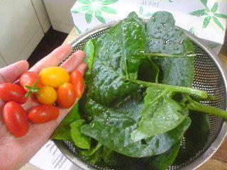 ■2011/8/6(土) つみたて野菜/ 11:45am