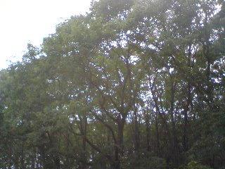 ■2011/10/10(月) 散歩に誘いました / 11:50am